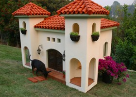 Charleston Dog House - Doggy Daycare near Park Circle - Real Deal with Neil