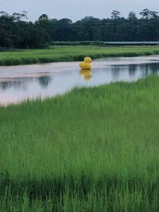 02 - Park Circle Duck - Creek - July 28 2018 - April Arnold